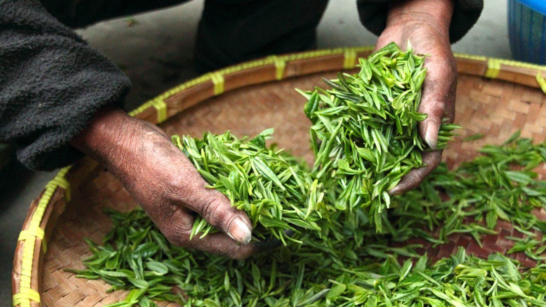 les bienfaits d'un thé naturel